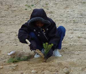 Planting a tree for arbor day. Photo by Tim Green