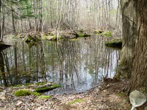 Vernal pool in Woodstock, CT.  Photo by Cheryl Dziura-Duke.